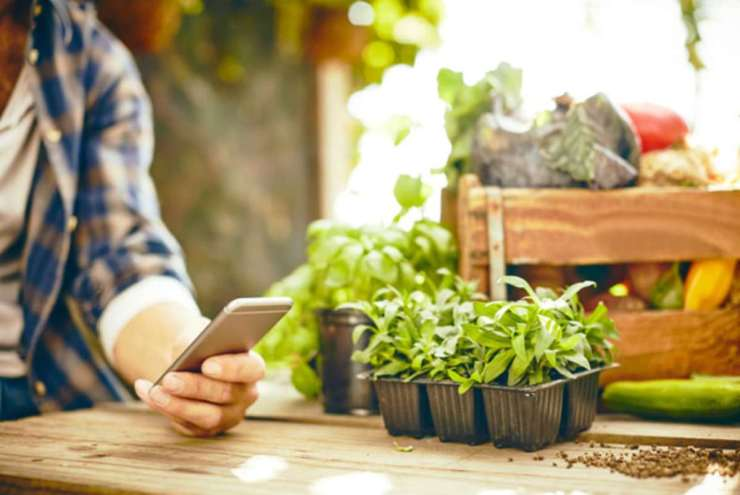 Herbs and vegetable crate on table   Gardening Tips and Tricks You Can Use Right Now!
