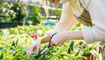 Feature | Woman Gardening | Gardening Tips and Tricks You Can Use Right Now!