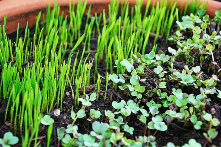 Grow Micro Greens | Gardening Tips and Tricks You Can Use Right Now!