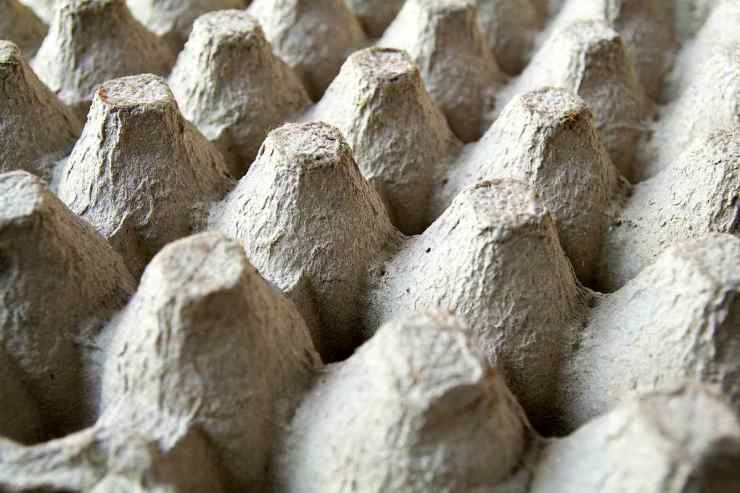 Close Up of Egg Cartons | Everyday Items You Could Use For Survival