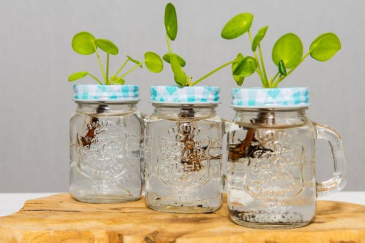 three-plants-standing-jars | seedling jar