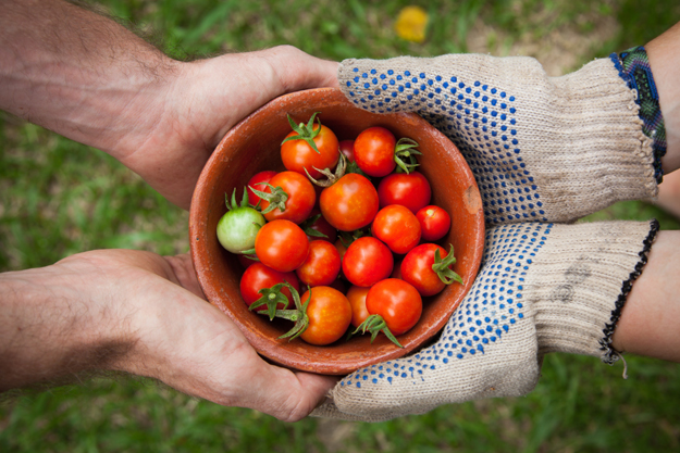 Guarantee access to Fresh Foods | Americans Take Up Gardening as Food Shortages Continue