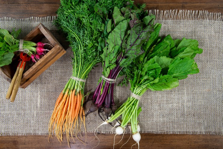 Root Vegetables   How to Have a Self-Sufficient Small Backyard Garden