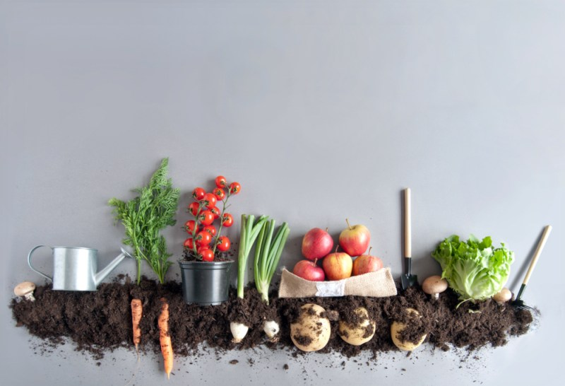 Grow Food   Off Grid Post Collapse Jobs for Income