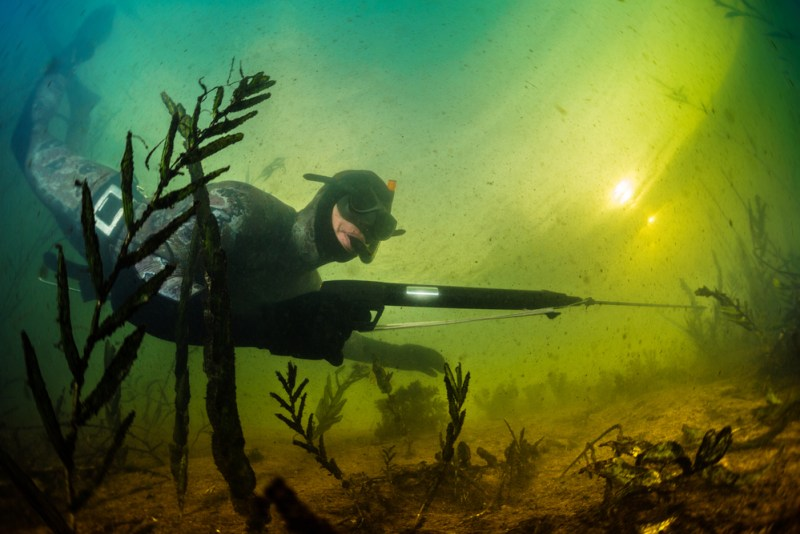 Why Spearfishing Is Valuable | How to Spear Fish