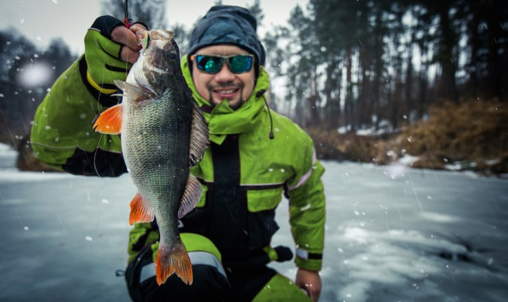 Trophy perch. Ice fishing background | ice fishing near me