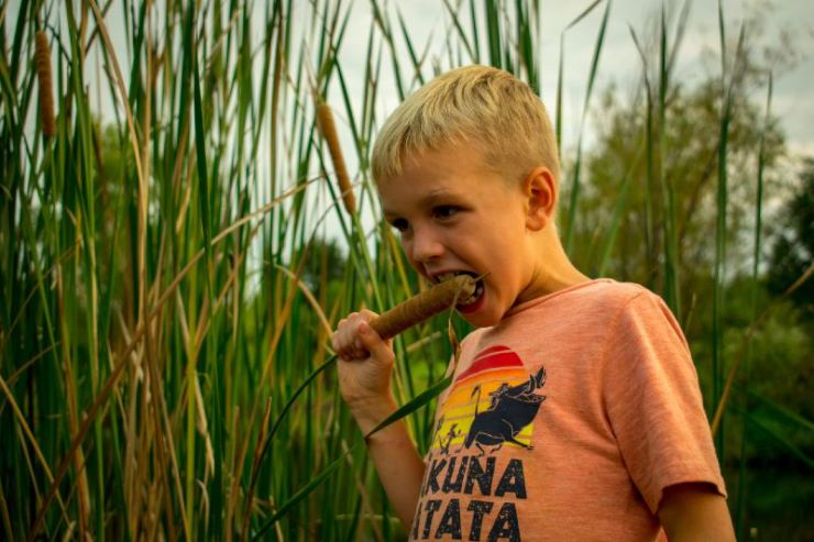 A little boy with a orange Disney shirt on. A little boy putting a catail in his mouth-Wild Survival Foods-ss