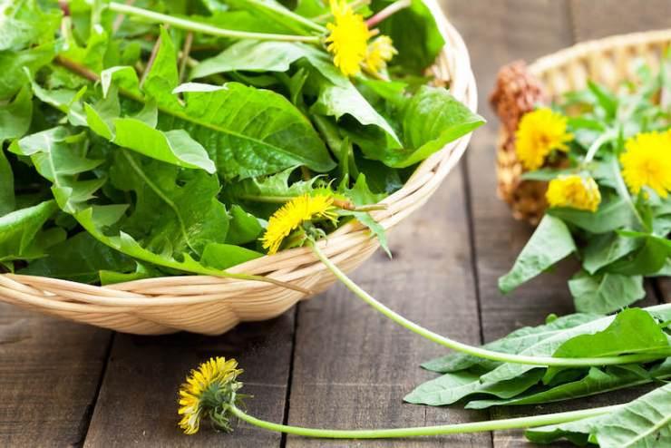 dandelion leaves and flowers | dandelion recipes