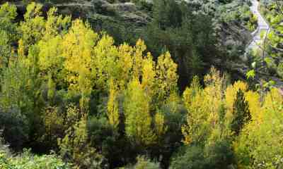 different trees in autumn | Tree Identification Guide | featured