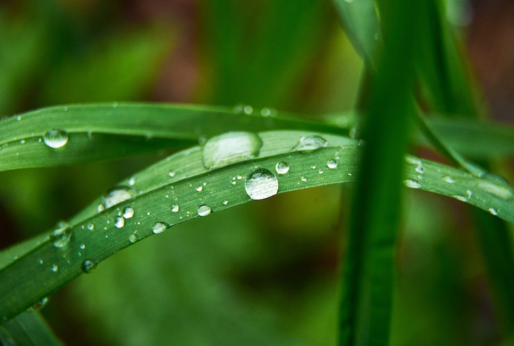 green grass with drops of water after rain | water vapor