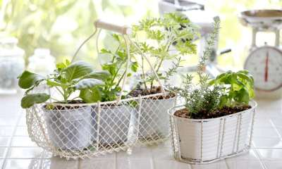 Kitchen garden of herbs windowsill | GETTING THE KITCHEN GARDEN READY FOR PLANTING 2021 | Featured