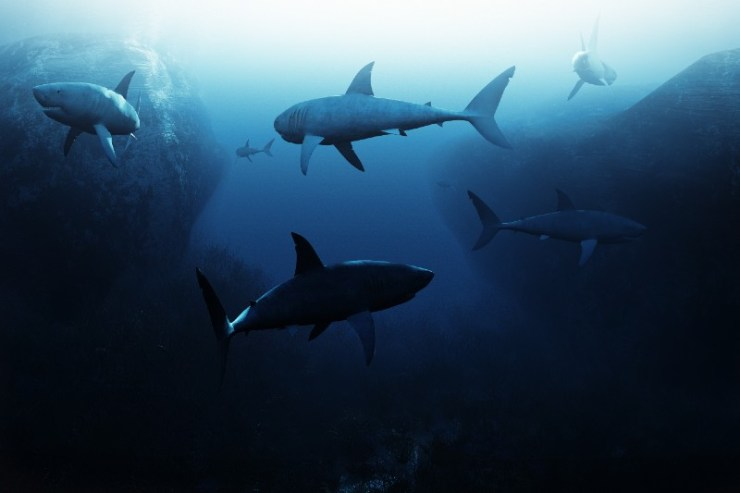 Shark encounter,Large school of sharks patrolling underwater-sea survival
