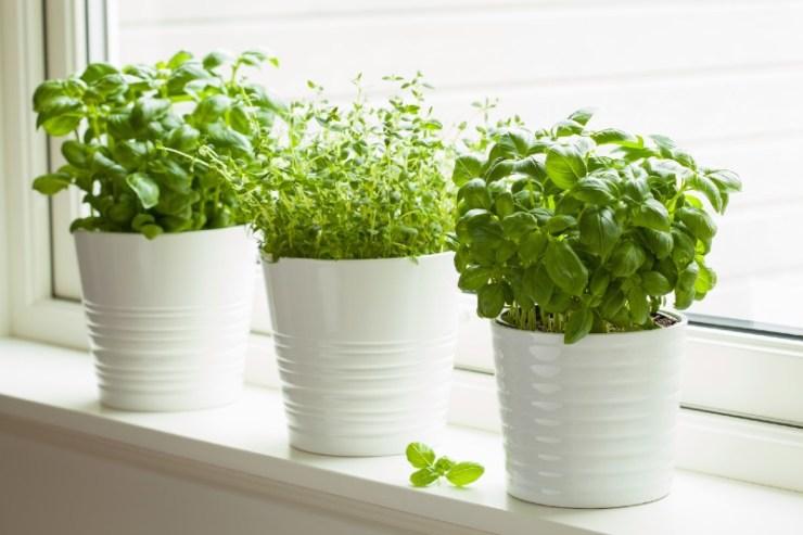 fresh-basil-and-thyme-herb-in-pot-kitchen-garden