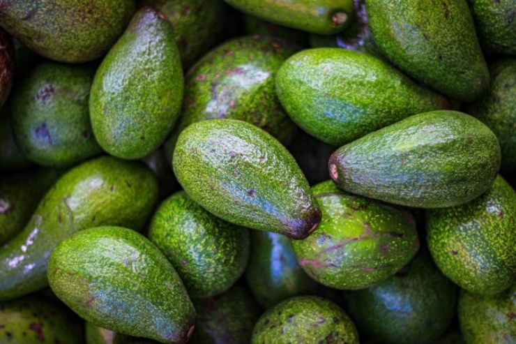 Avocado | Storing food