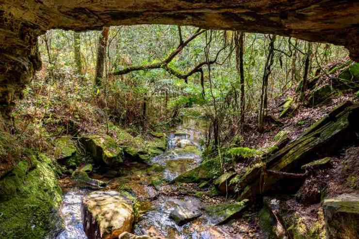 Stone cave interior with small river surrounded by tropical vegetation of Brazilian rainforest-terrain