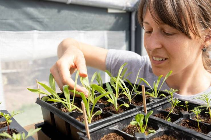 White-female-tends-to-her-seed-starts-in-the-green-house-seed-starting