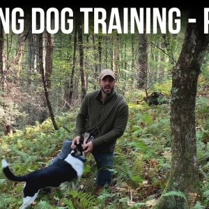 Hunting Dog Training - Part 2