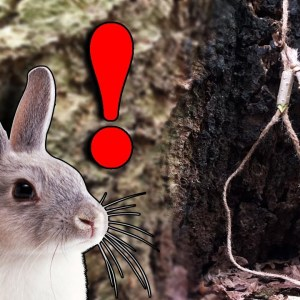 SURVIVAL SNARE TRAP: Catch Survival Food Without Wire - Easy Game Guaranteed