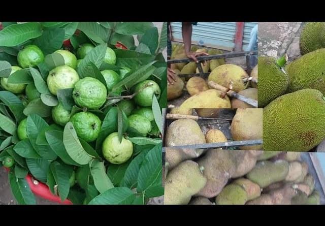 Survival Food: Finding healthy food meet natural jackfruit & Fresh Guava fruit in my village