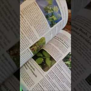 The Lost Book of Herbal Remedies 1