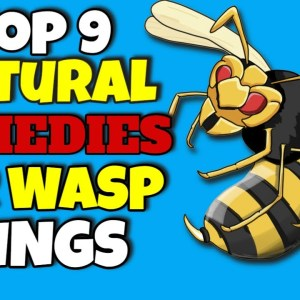 Top 9 Natural Remedies for Wasp Stings You Need To Know 💢