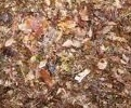 Leaf Mold Mulch