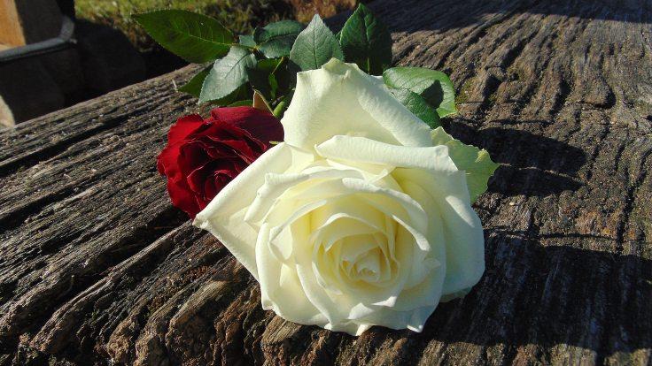 bloom-blossom-flora-236259.jpg