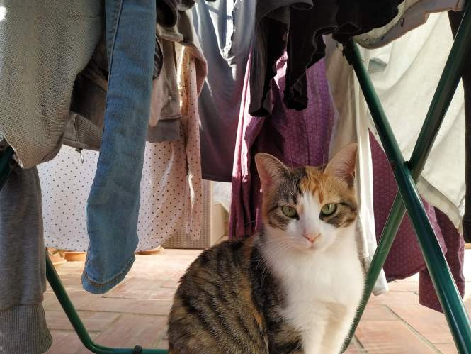 Our cat Pita sitting under our drying clothes