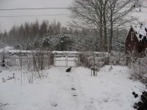 Mion i snön.