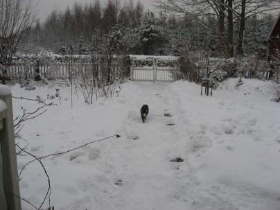 Vinterpromenad.