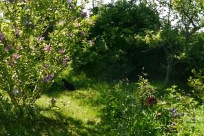 Vildvuxen trädgård...