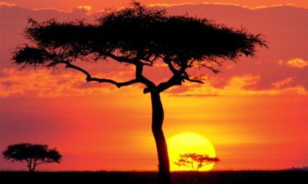 Medicina africana: la gran olvidada