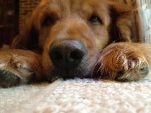 Hailey, My Dog