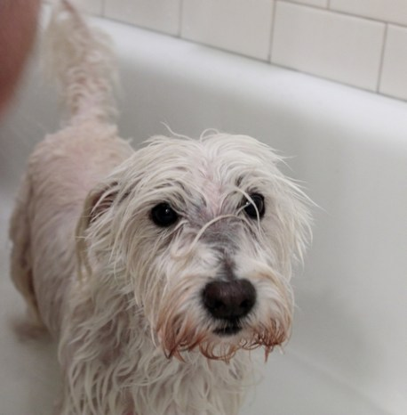 06.16.2012_Scottie Fergus Bath Time_0003_BW_small