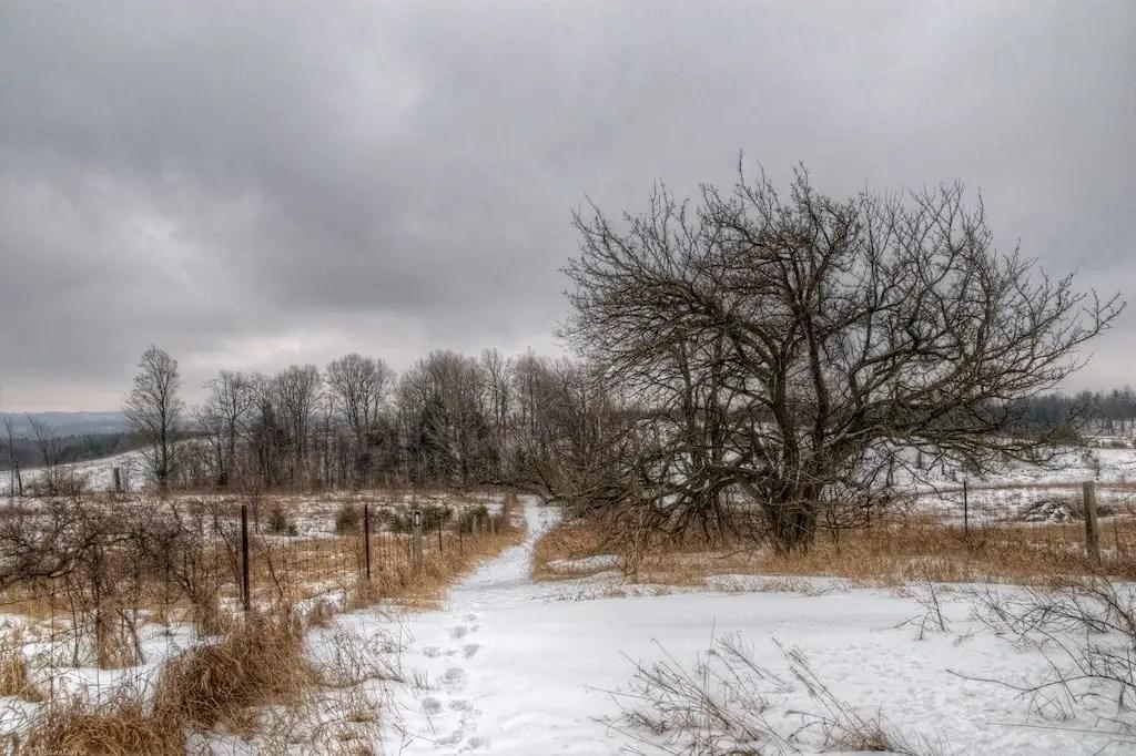 northern-path-into-hockley-1.jpg