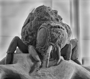 Sand Bee