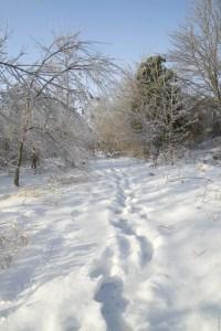 Wandering the Icy Wonderland