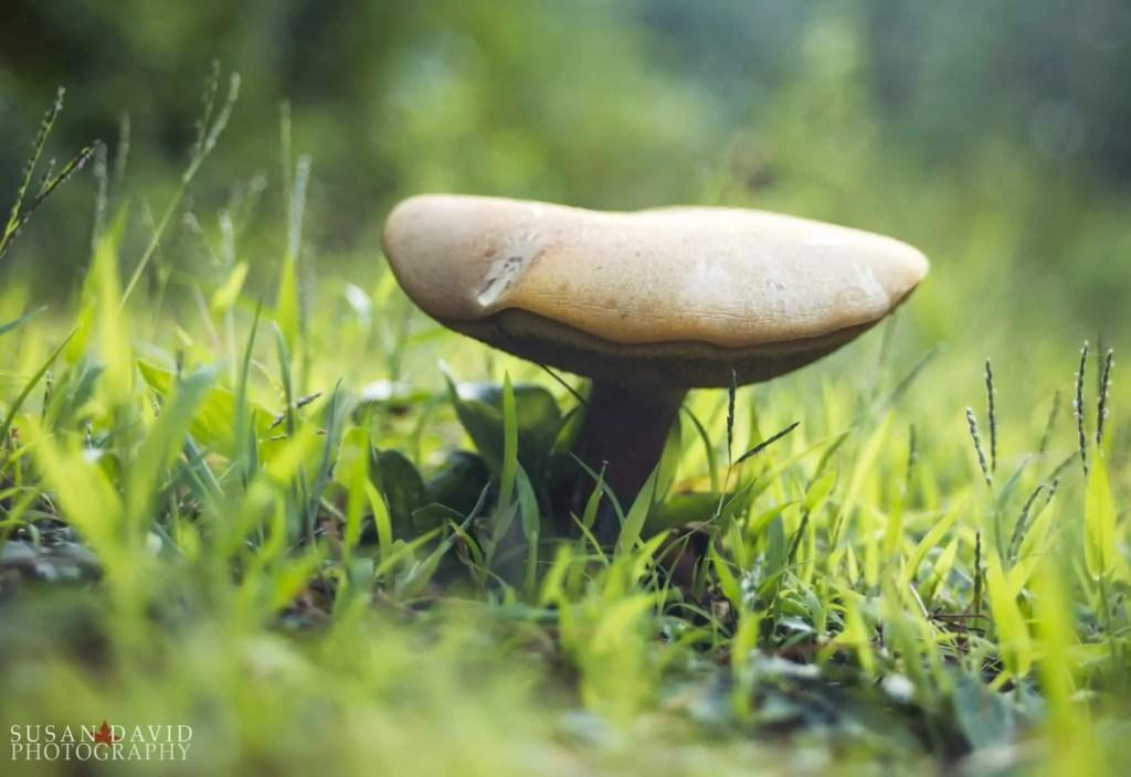 Smiling-Mushroom.jpg