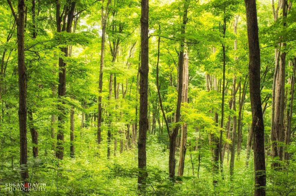 Summer-Forest.jpg
