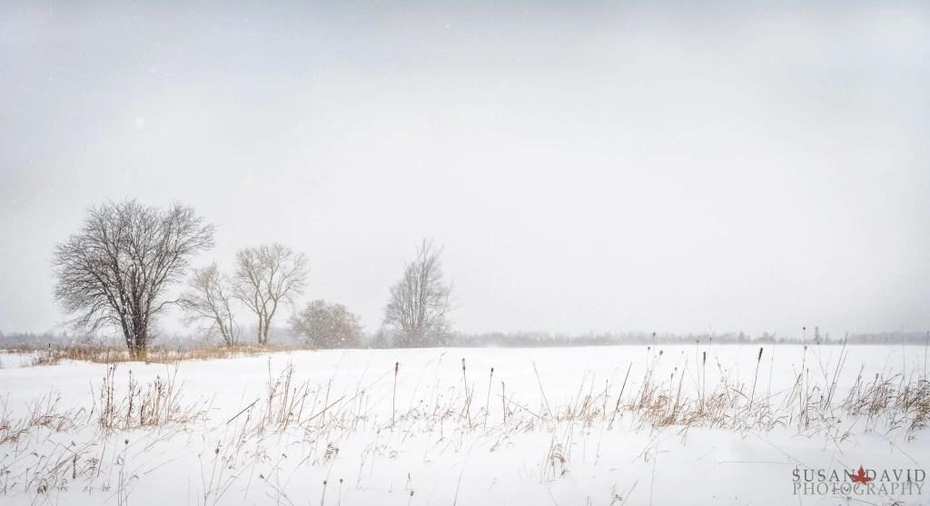 Snowy-Drive-Home.jpg