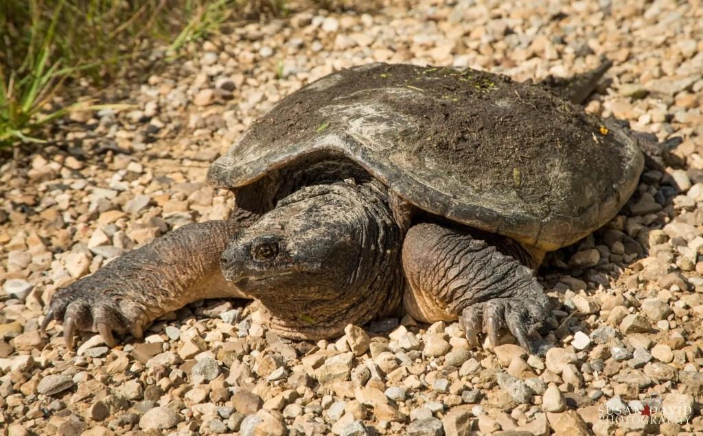 Turtle-on-a-MIssion.jpg