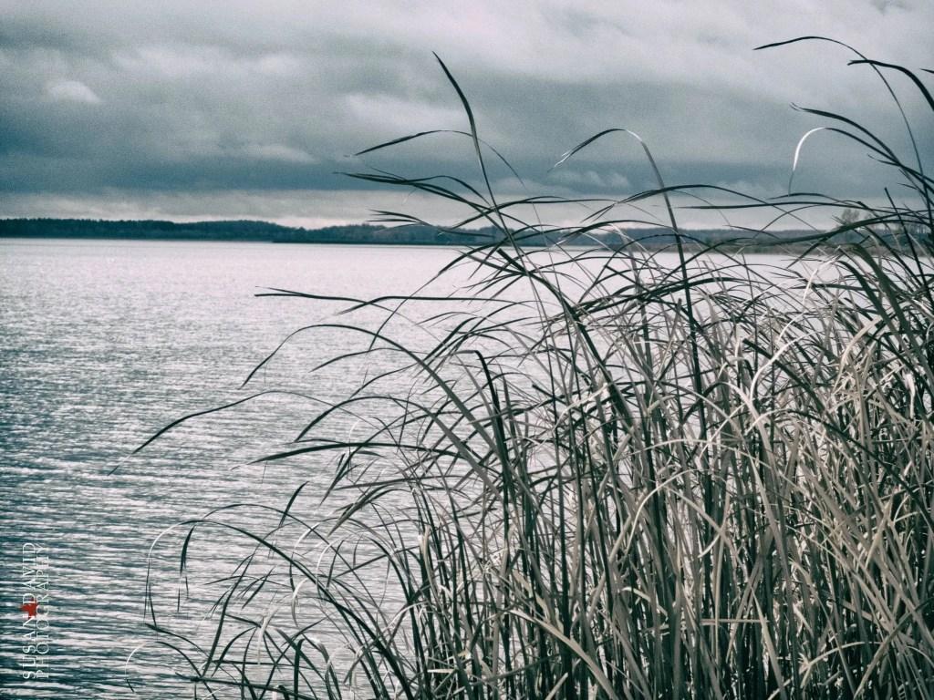 Reeds-in-the-Wind.jpg