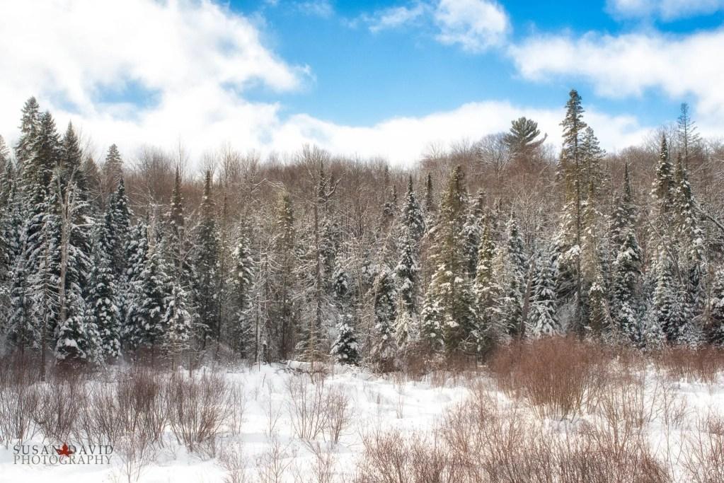 Snow-Dusted-Edit.jpg