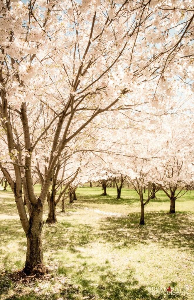 A vintage spring
