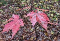 More colorful foliage