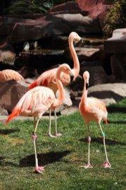 Flamingoes at The Flamingo