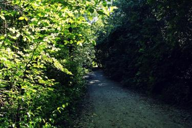 LTR-Moore-Park-Ravine-trail