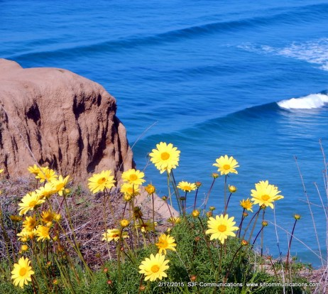 Wildflowers at Torrey Pines State Reserve
