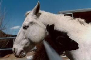 Horses and Llamas best