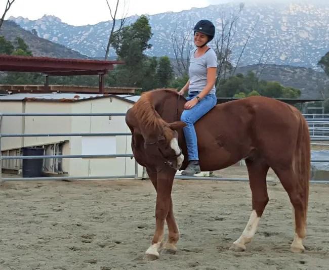 horse blogger Carey